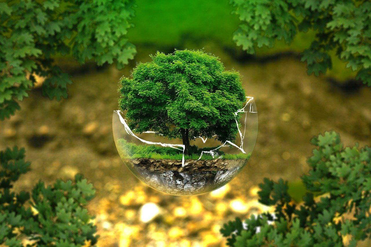 L'importanza della manutenzione ambientale